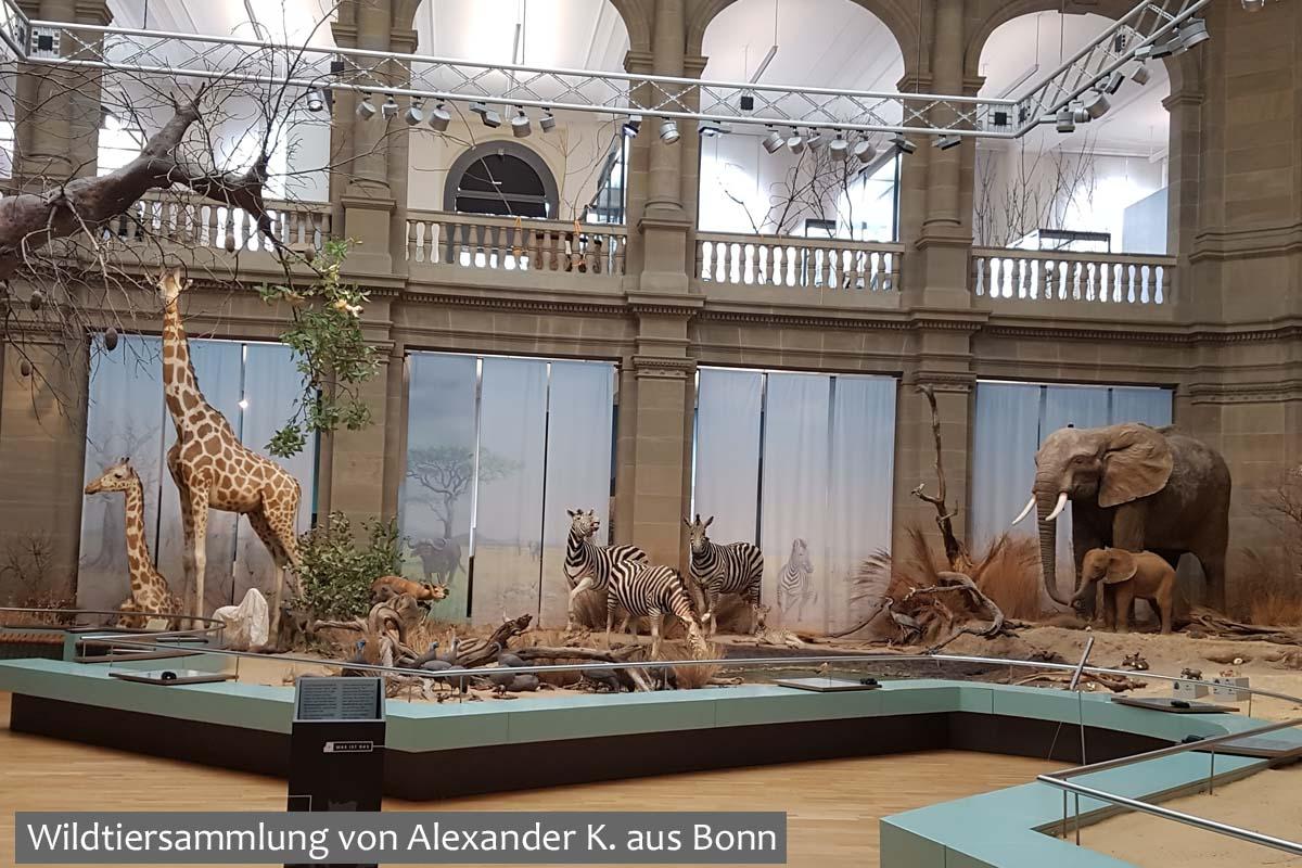 Wildtiersammlung von Alexander K. aus Bonn